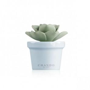 מפיץ ריח יוקרתי Mini succulent - תכלת - CHANDO