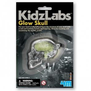 מעבדת הילדים - מחזיק מפתחות מדעי - גולגולת זוהרת בחושך